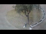 Прикормщица стаи собак, Санкт-Петербург, пр. Мориса Тореза, 9.